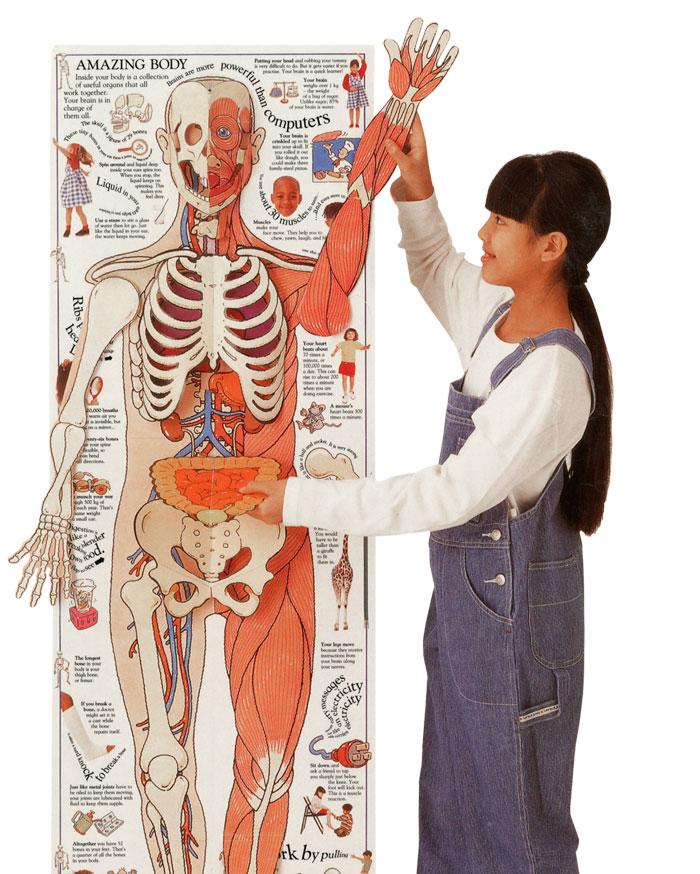 Amazing 3D Body